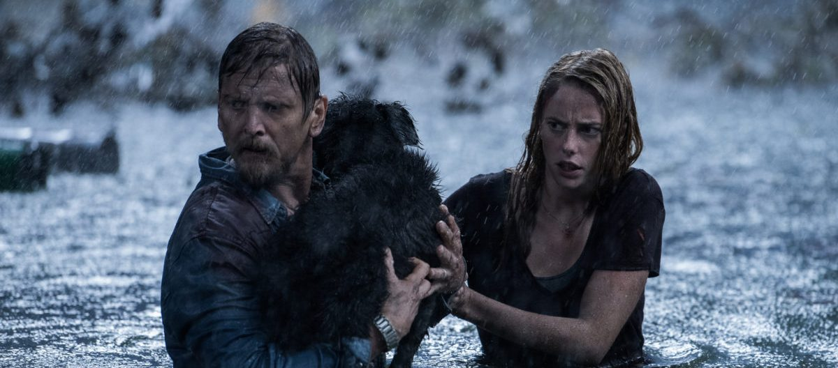 Alexandre Aja on Not Making a Typical Monster Movie With 'Crawl' And Whether There Will Be a Sequel [Interview]