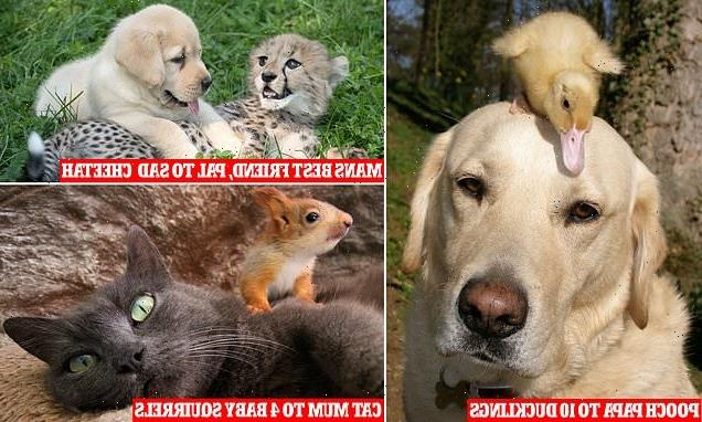 Meet the animal kingdom's most unlikely surrogate parents