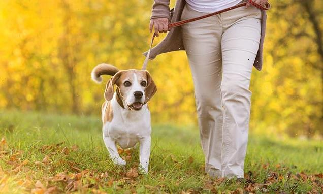 Why losing a pet can hurt as much as losing a family member