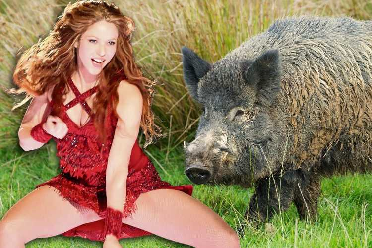 Shakira reveals she was mugged by two wild boar who ran off with her bag