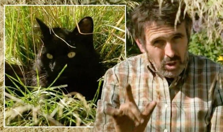 Your timing is impeccable! Adam Frost halts Gardeners World demo as pet derails segment